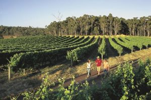 Margaret River Caves Wine and Cape Leeuwin Lighthouse Tour from Perth - Accommodation Perth