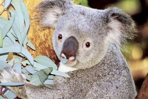 Perth Zoo General Entry Ticket and Sightseeing Cruise - Accommodation Perth